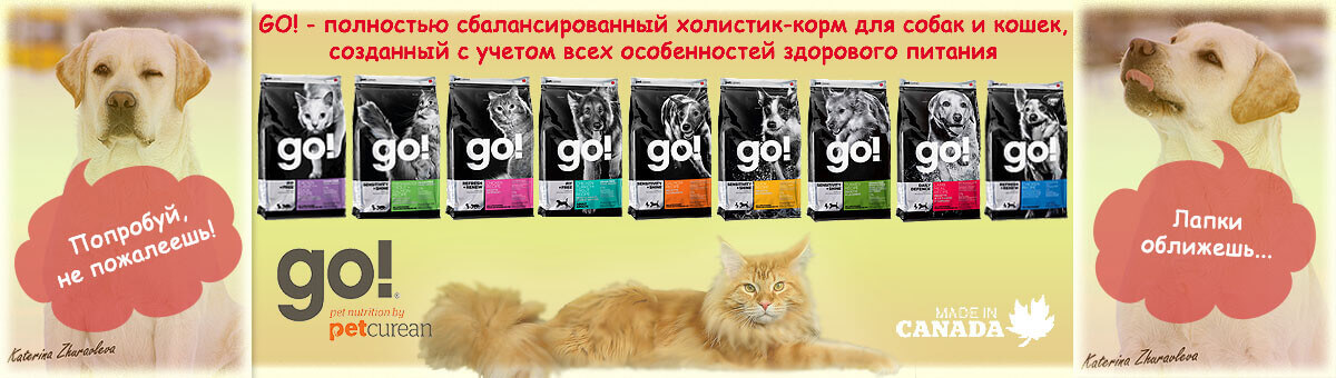 news-brand-go-food-for-dog-and-cats